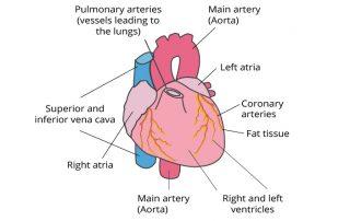 Right-Sided Heart Failure-cardiologist in kolkata